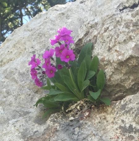 Sandia Crest - Rocky Point